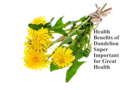 Health Benefits Of Dandelion – Super Important For Great Health