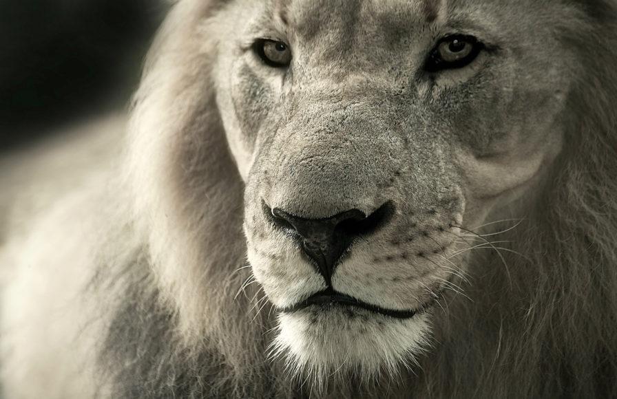 Loving a Leo isn't easy, but it's rewarding.