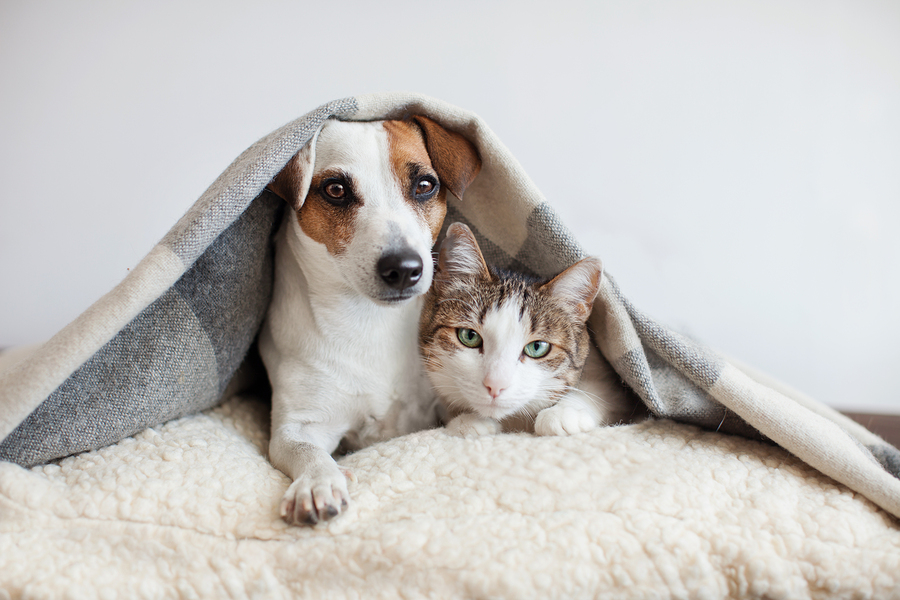 Preventing Cancer In Pets, Holistically (Video)