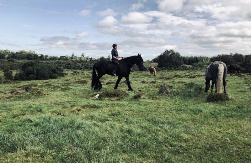 6 Day Yoga And Natural Horsemanship Retreat