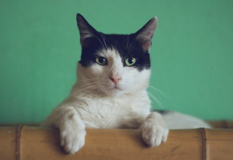 Tips To Growing Mindfulness With Your Cat