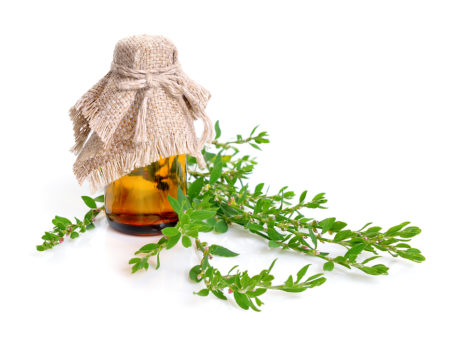 Knotgrass – For Fatigue, Parasites, And Kidney Problems