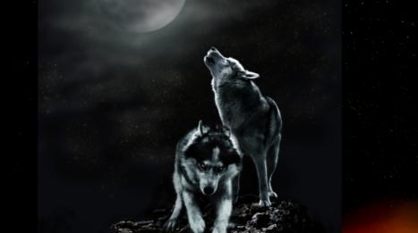 Leo's Full Moon's Reality Check!