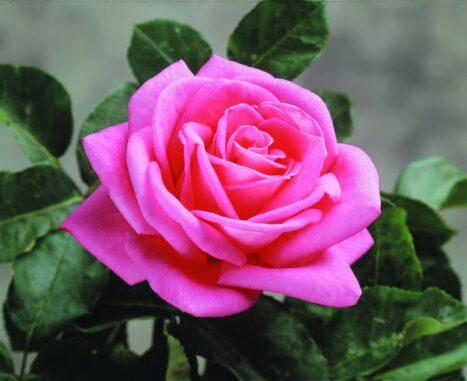 The Eternal Flower